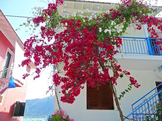 Griekenland-Lefkas-Geni-p1050902ed